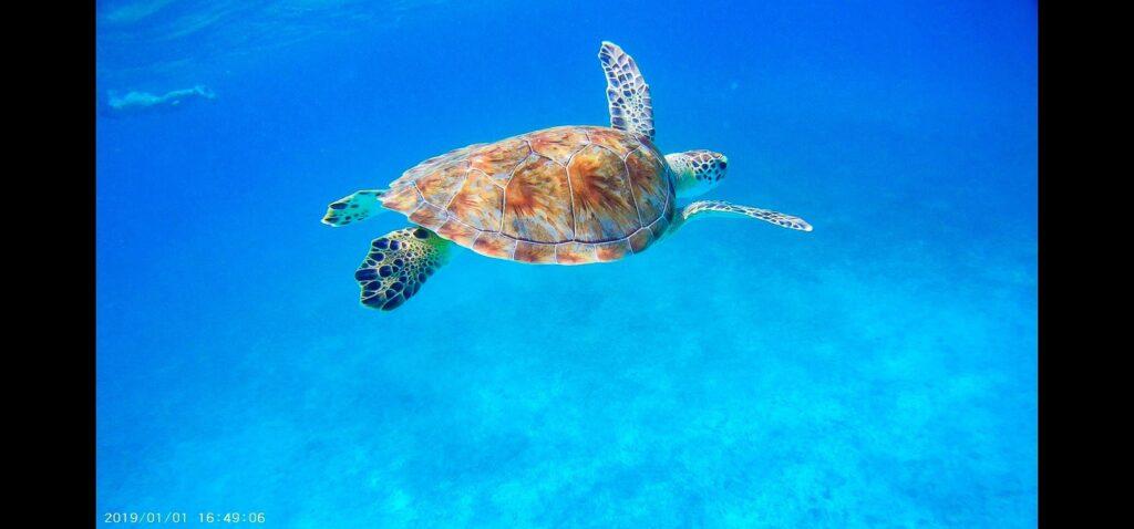 Aruba: Schildkröte